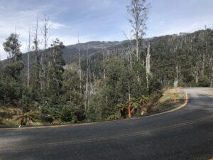 The road up falls creek